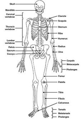 skeleton diagram project wiring diagramskeleton diagram project 18 9 tierarztpraxis  ruffy de   u2022skeleton diagram 0d78d4a2913
