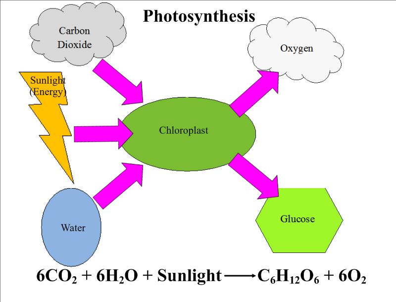 Cellular Respiration Vs Photosynthesis Mrs Thomas Classes